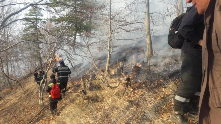 jud-caras-severin-incendiu-langa-satul-petnic-ard-peste-80-de-hectare