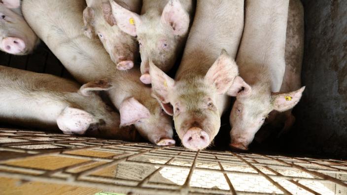 doar-opt-procesatori-de-carne-de-porc-din-romania-au-aviz-de-export-in-ue