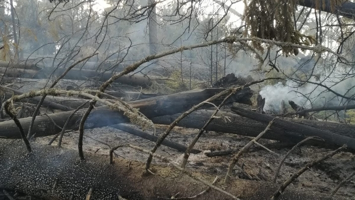 incendiu-forestier-in-judetul-mures