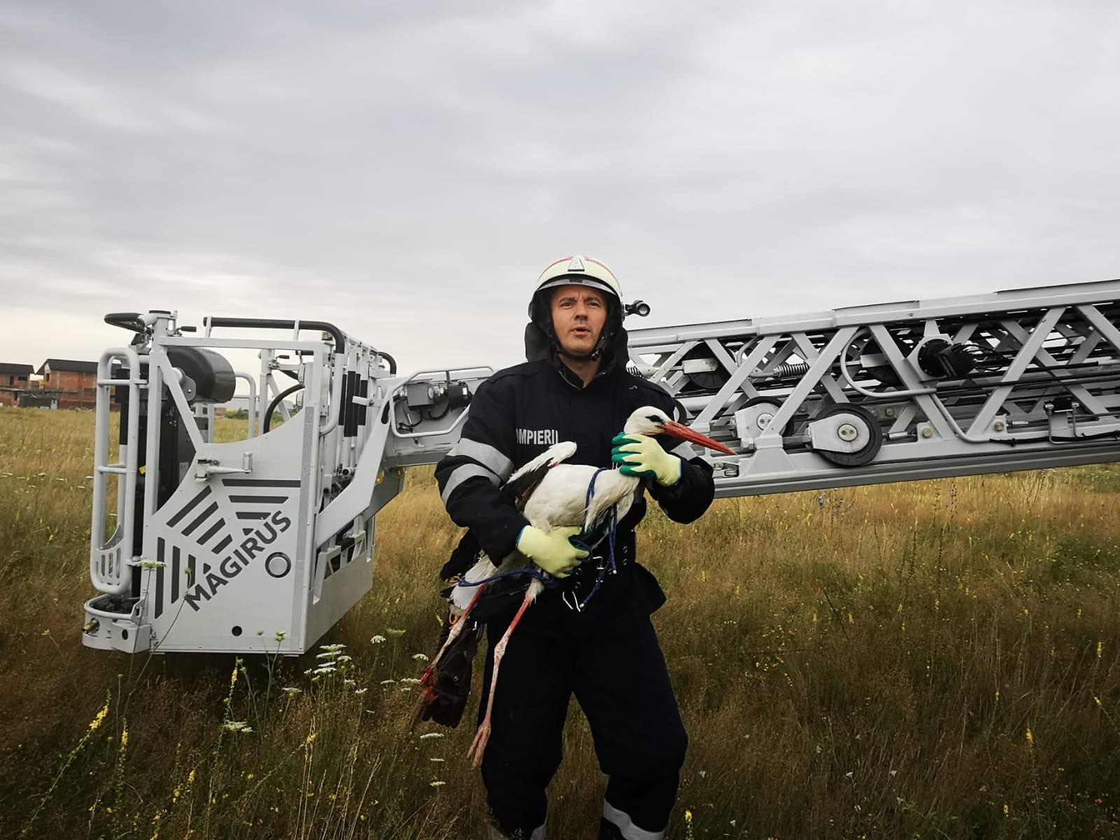 pompierii-argeseni-au-salvat-o-barza-prinsa-intre-firele-electrice