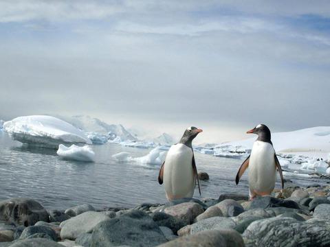pinguini-tapiri-i-insecte-la-zoo-brasov
