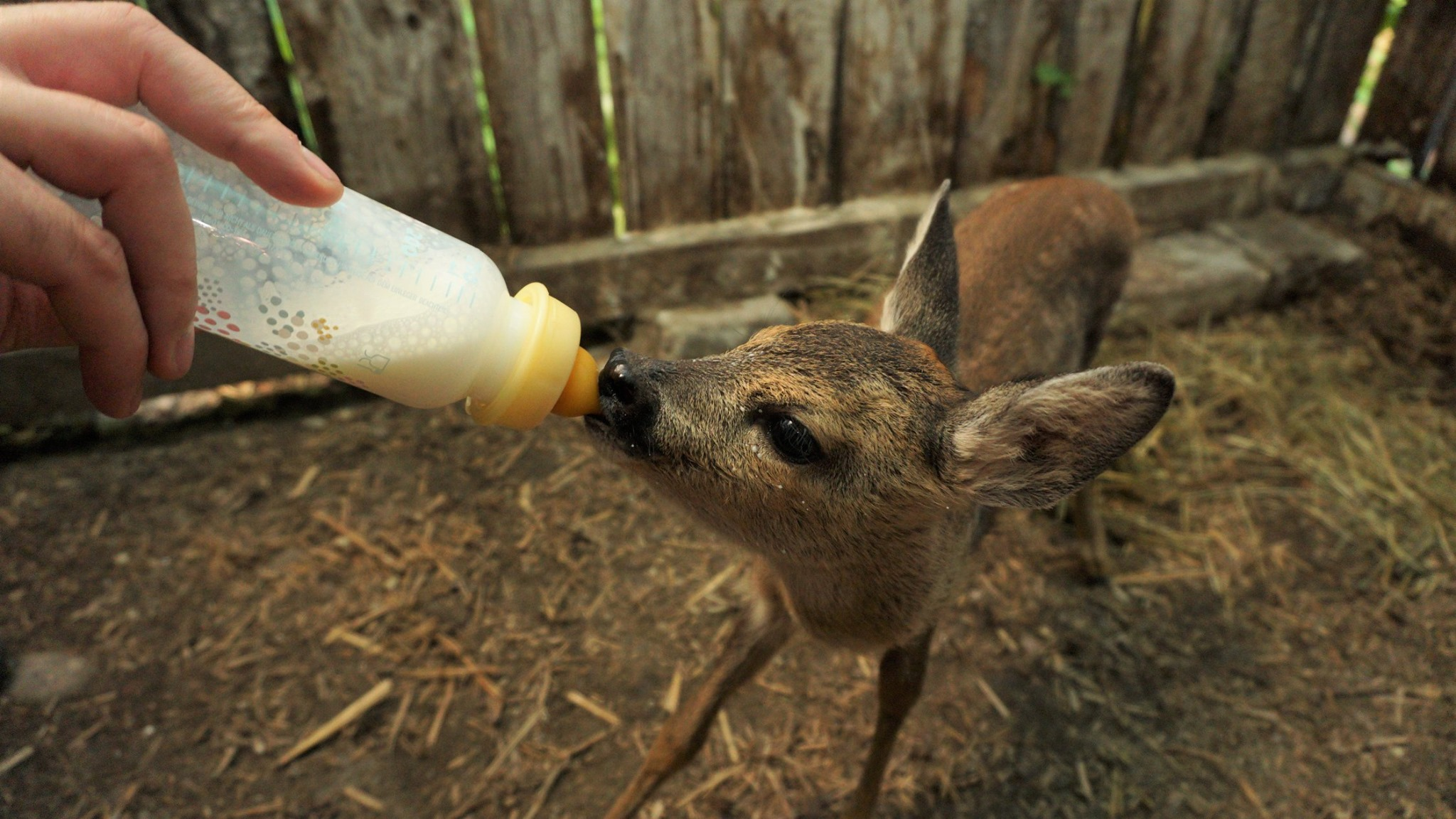 intre-prieteni-invatam-sa-salvam-animalele-salbatice-aflate-in-primejdie