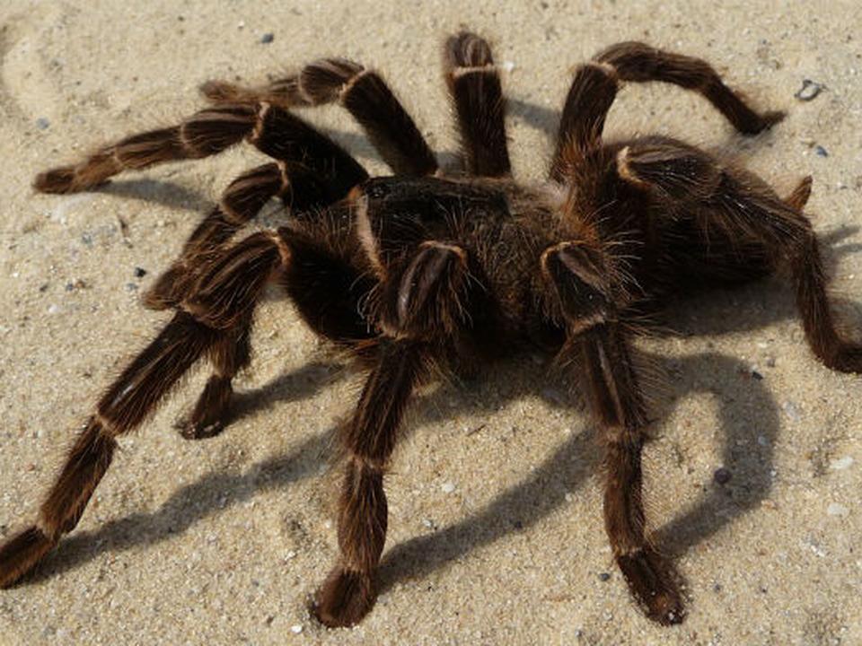 in-curand-insecte-i-tarantule-la-gradina-zoologica-braov