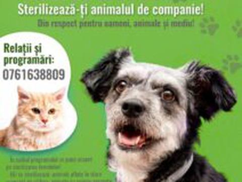 campanie-de-sterilizare-gratuita-a-cainilor-i-pisicilor-din-fagara
